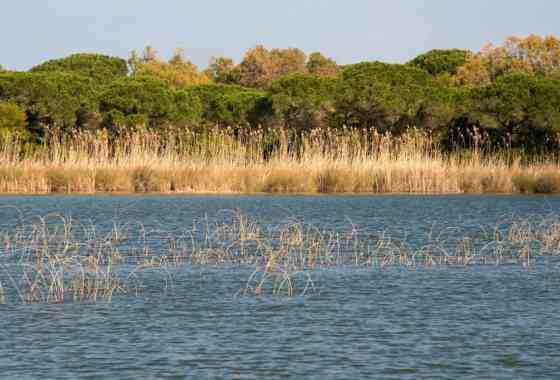 THE POND PLATAMONA: BETWEEN SCENTED JUNIPERS AND BIRDWATCHING ACTIVITIES