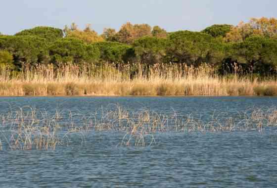 Lo stagno di Platamona. Tra ginepri profumati e birdwatching
